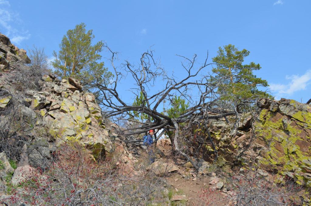 Дерево здоровья
