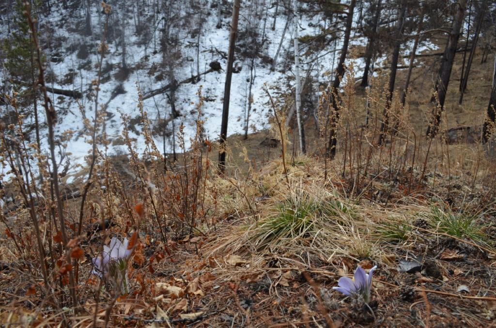 Цветы на южном склоне
