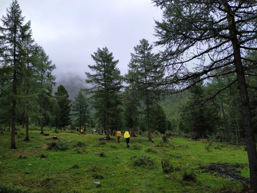 Место стоянки на границе леса